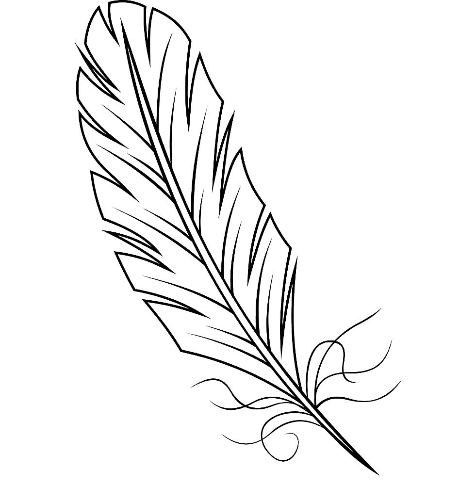 Peacock feather drawing black and white