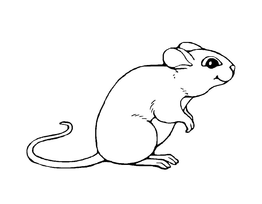 how to draw a field mouse